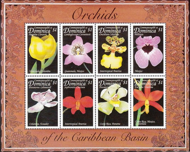 [Orchids of the Caribbean, Typ ]