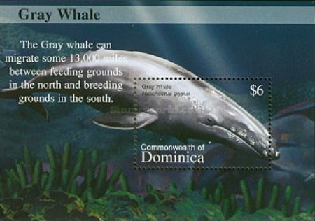 [Whales, Typ ]