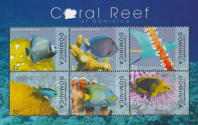 [Fauna in the Coral Reefs, Typ ]