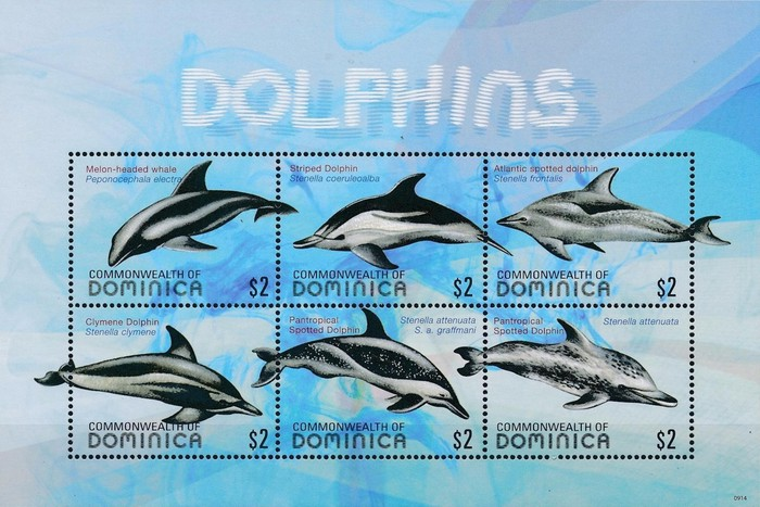 [Dolphins, Typ ]