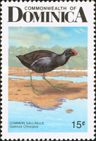 [Birds of Dominica, Typ AGL]