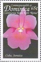 [Orchids of the Caribbean, Typ CQC]