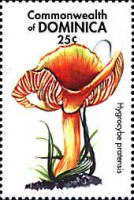 [Mushrooms of the World, Typ DKY]