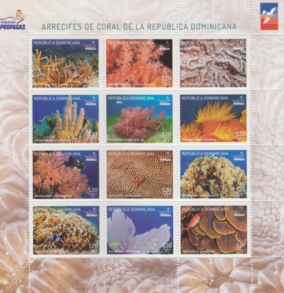 [Marine Life - Coral Reefs of the Dominican Republic, Typ ]
