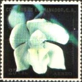 [Airmail - Orchids, Typ NT]