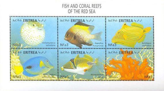 [Fish and Corals, Typ ]