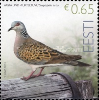 [Bird of the Year - European Turtle Dove, Typ AAB]