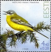 [Bird of the Year - Yellow Wagtail, Typ OH]