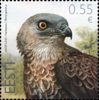 [Bird of the Year - European Honey Buzzard, Typ YF]