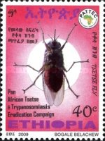 [Pan African Tsetse & Trypanosomiasis Campaign, Typ BFC]