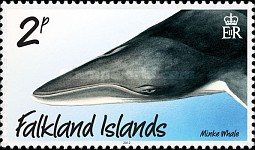 [Marine Life - Whales and Dolphins, type APA]