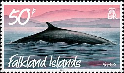 [Marine Life - Whales and Dolphins, type APE]