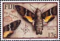 [Hawk Moths of Fiji, type AGE]