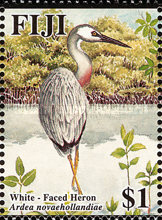 [Herons and Egrets, type ALL]
