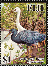 [Herons and Egrets, type ALM]