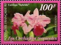 [Orchids, Typ ABN]