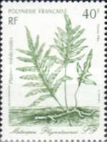 [Medicinal Plants - Designs showing Illustrations by Gilles Cordonnier, Typ QE]
