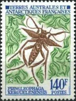 [Insects, type BO]