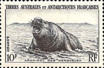 [Penguins and Seals, type D]
