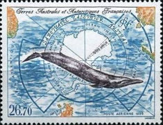 [Airmail - Southern Whale Sanctuary, type LT]