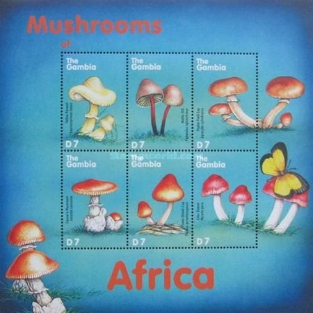 [African Mushrooms, type ]