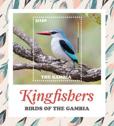 [Birds of Gambia - Kingfishers, type ]