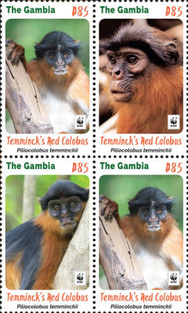 [WWF - Red Colombus Monkey, type ]