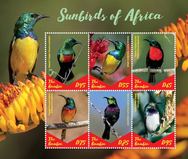 [Birds - Sunbirds of Africa, type ]