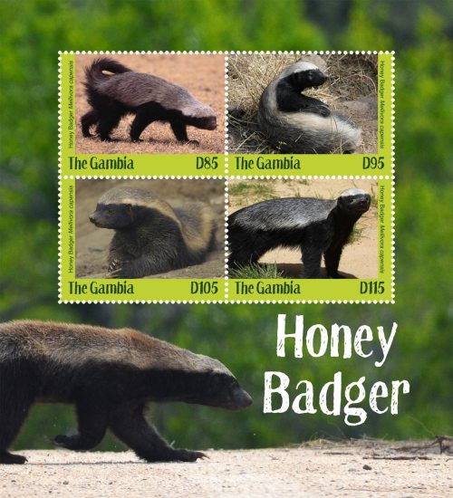 [Fauna - Honey Badger, type ]
