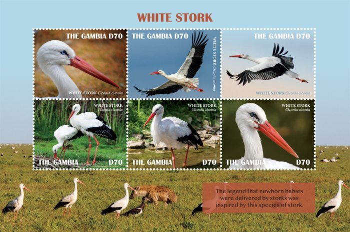 [Birds - White Stork, type ]