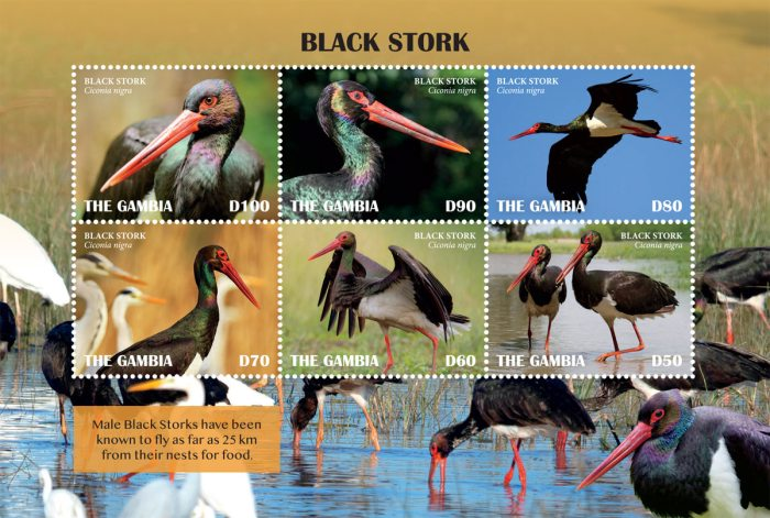 [Birds - Black Stork, type ]