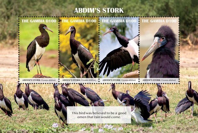 [Birds - Abdim's Stork, type ]