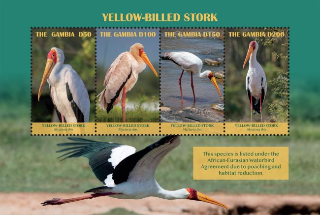 [Birds - Yellow-Billed Stork, type ]