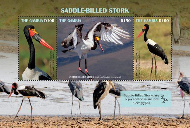 [Birds - Saddle-Billed Stork, type ]