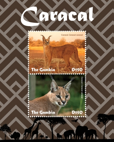 [Fauna - Caracal, type ]