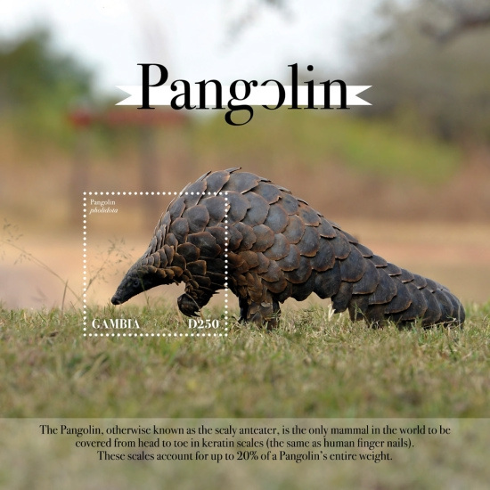 [Fauna - Pangolin, type ]