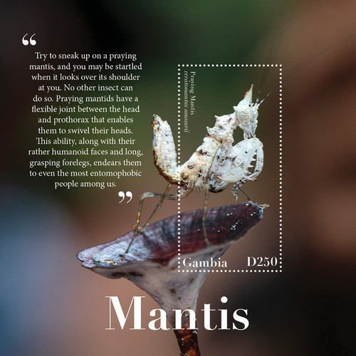 [Insects - Mantis, type ]