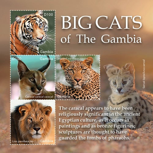 [Fauna - The Big Cats of Gambia, type ]