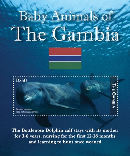 [Baby Animals of the Gambia, type ]