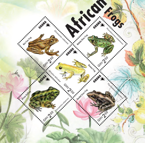 [African Frogs, type ]