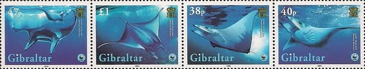 [Global Conservation - Manta Ray, type ]