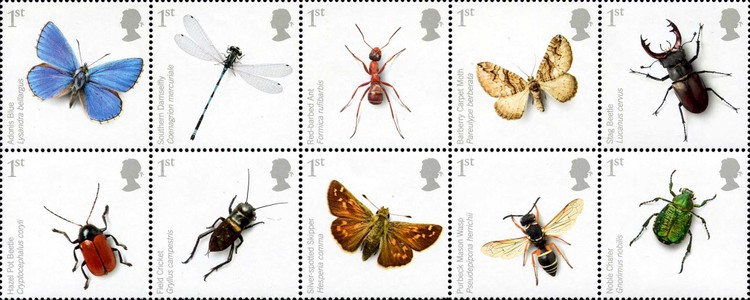 [Insects - UK Species in Recovery, Typ ]