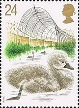 [Swans - The 600th Anniversary of Abbotsbury Swannery, Typ ANH]