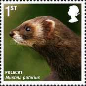 [Mammals of the UK, Typ CJR]