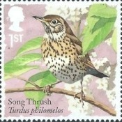 [Birds - Songbirds, Typ DRM]