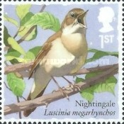 [Birds - Songbirds, type DRN]