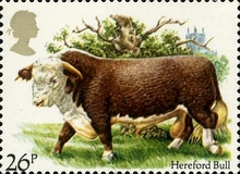 [National Cattle Breeders' Association, Typ ZB]