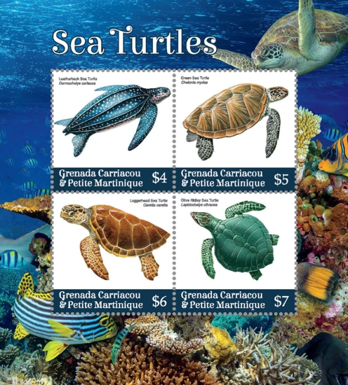 [Marine Life - Sea Turtles, Typ ]
