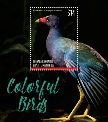 [Colorful Birds, type ]