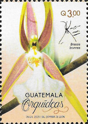 [Flowers - Orchids of Guatemala, type AWF]